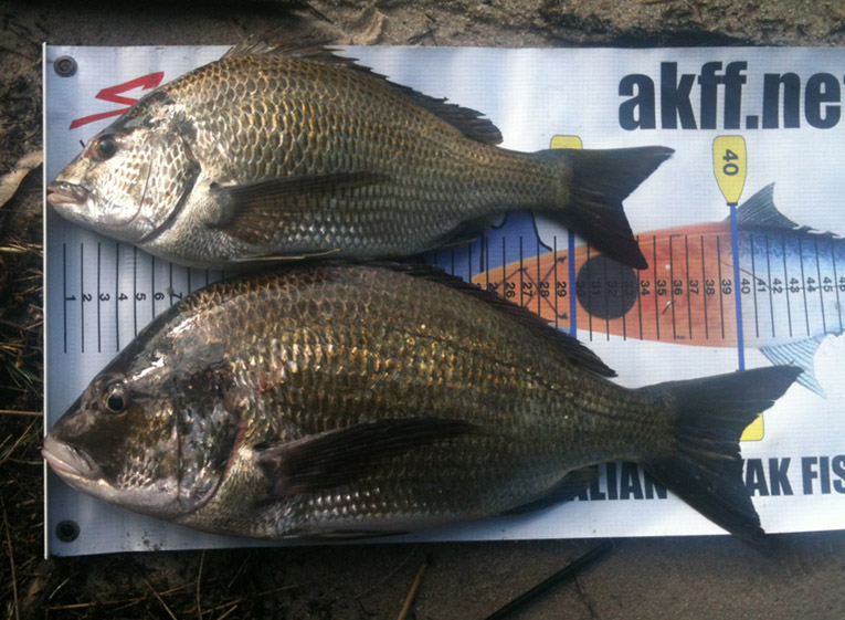 (5) Brag Bream.jpg